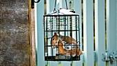 Grey squirrel inside a squirrel-proof bird feeder