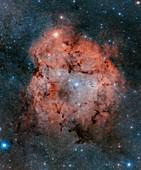 IC 1396 and the Elephant Trunk Nebula