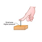 Pressure exerted by finger pushing a nail into wood, illustr