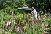 Cut flower farm, Detroit, USA