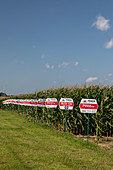 Genetically modified corn farm, USA