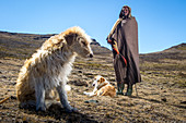Shepherd with his dogs, Lesotho