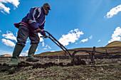 Farmer pushing a plow, Somenkong, Lesotho