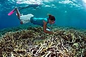 Snorkelling schoolchildren using coral reef ID guides