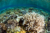 Healthy hard coral reef