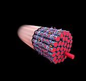 Muscle fibre structure, illustration