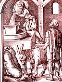 16th Century miller, illustration