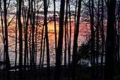 Forested shoreline at sunrise