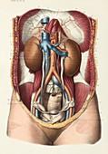 Kidney anatomy, 1866 illustration