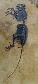 Darwinius primate fossil