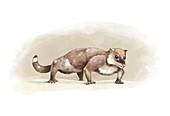 Yanoconodon prehistoric mammal, illustration