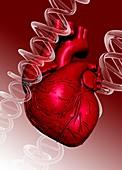 Human heart and dna strand, illustration