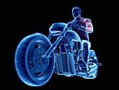 Illustration of a biker's muscles