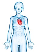 Illustration of a woman's heart