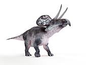 Illustration of a zuniceratops