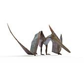 Illustration of a Pteranodon