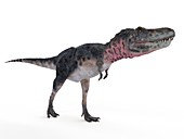 Illustration of a tarbosaurus