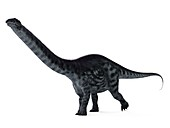 Illustration of a apatosaurus