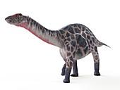 Illustration of a Dicraeosaurus