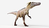 Illustration of a austoraptor