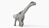 Illustration of a camarasaurus