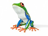 Illustration of a tropical frog