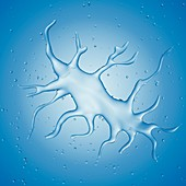 Illustration of a dendritic cell