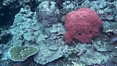 Brain coral and fish