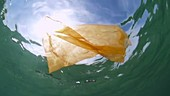Orange plastic bag filmed underwater
