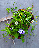 Wild herb salad basket with horned violets