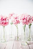 Pfingstrosenblüten in Glasflaschen