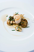 Grilled scallops on porcini mushroom ragout