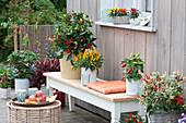 Chilipflanzen Arrangement auf der Terrasse