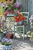 Herbst - Terrasse: Lampionpflanze, Astern, Walnüsse, Hokkaido-Kürbisse, Stiefmütterchen und Drahtkorb mit Äpfeln