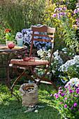 Sitzplatz am Beet mit Herbstastern, Gräsern und Fetthenne