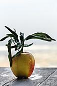 Gelb-roter Apfel mit Blättern vor hellem Hintergrund