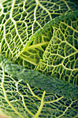 Savoy cabbage head (close-up)