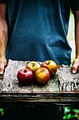 Hände halten frisch geerntete Äpfel auf Holzplatte