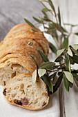 Ciabatta with olives, sliced
