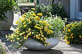 Gelb-weiß bepflanzte Schale mit Zinnien, Zauberglöckchen und Zauberschnee