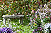 Sitzplatz an Zierapfelbaum und Beet mit Astern und Herbstanemonen