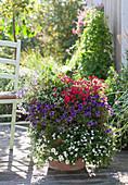 Schale mit Zauberglöckchen, Elfenspiegel, Zauberschnee und Schneeflockenblume