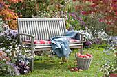 Holzbank am Beet mit Herbstastern, Korb mit frisch gepflückten Äpfeln