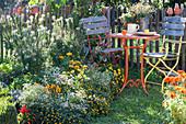 Beet mit Spinnenpflanze, Husarenknöpfchen, Zinnien, Zauberschnee und Chili