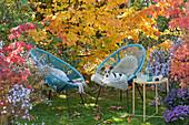 Moderne Sessel vor Eisenholzbaum in Herbstfärbung, Hund Zula