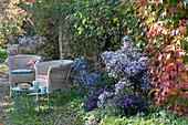 Schattiger Sitzplatz mit Korbsesseln und Herbstastern