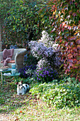 Schattiger Sitzplatz mit Korbsessel und Herbstastern, Hund Zula