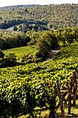 Weingut 'Nittardi', Toskana, Italien