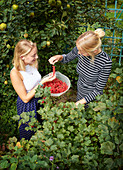 Two young women picking redcurrants