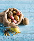 Various potatoes in a jute sack